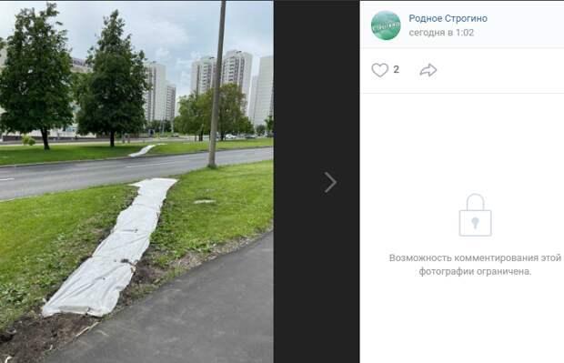 Тропинки через газон на Строгинском бульваре ликвидировали