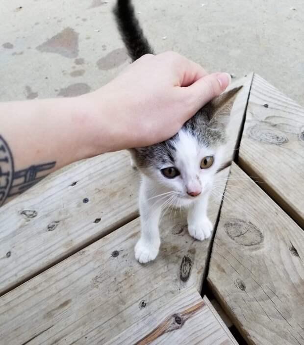 котенка гладят