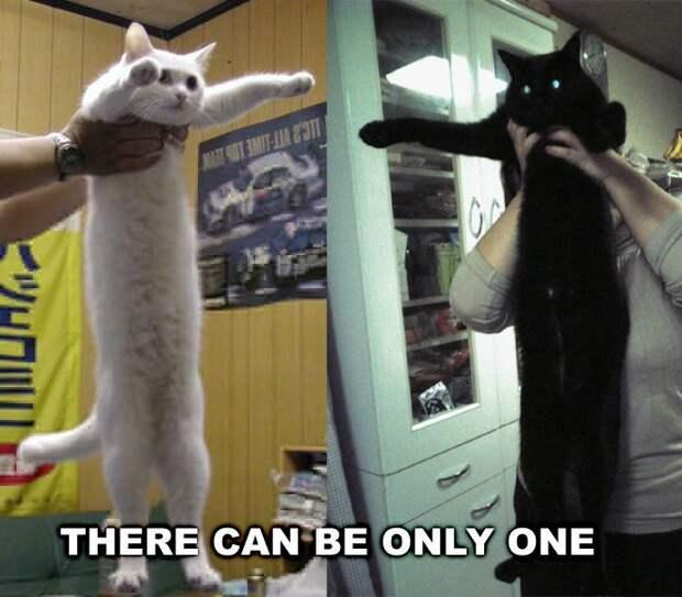 7 культовых мемов с самым длинным котом Нобико