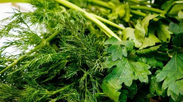 Как сохранить свежесть зелени – полезные лайфхаки
