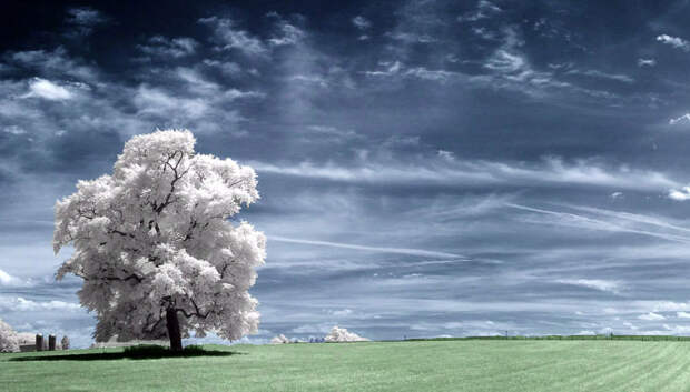 Увидеть невидимое: инфракрасная фотография