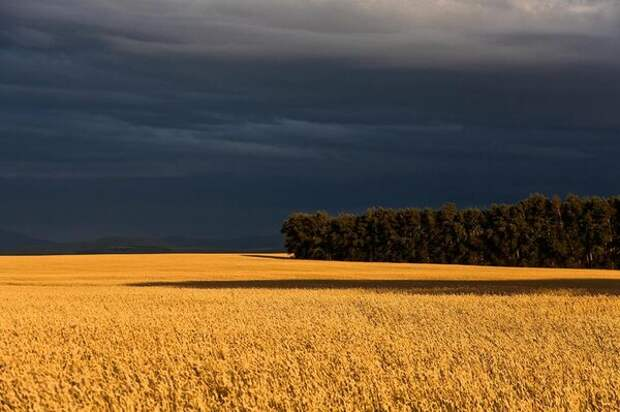Одно из самых известных фото А. Саламатова. https://www.facebook.com/profile.php?id=100001851805453
