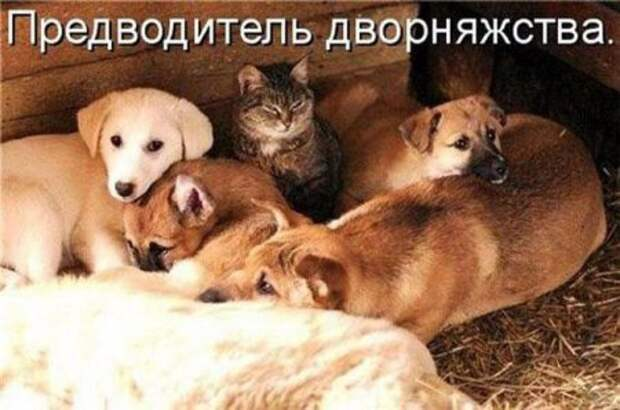 Смешные картинки о животных с подписями.