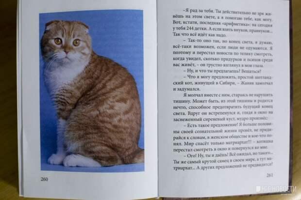 Новосибирец написал книгу в память об умершем от рака коте книга, кот, новосибирск, память