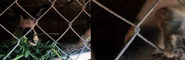 Минэкологии РК: контактный зоопарк в Актау проверят