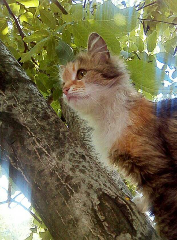 Продолжение истории кошки Нюши