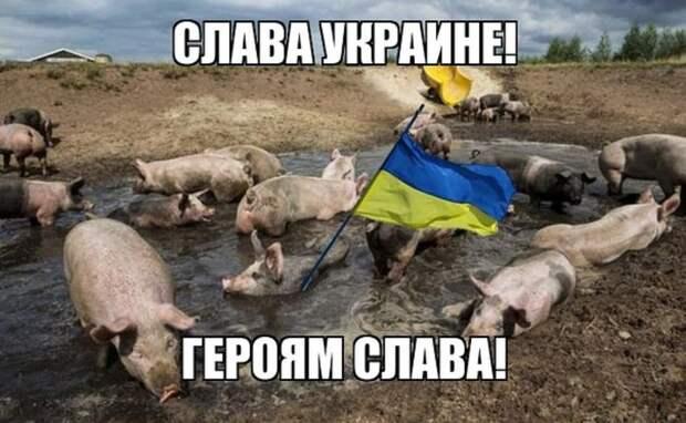 Медаль за распространение исторической лжи: Захарова о позорной «награде» к 30-летию «незалежности» Украины