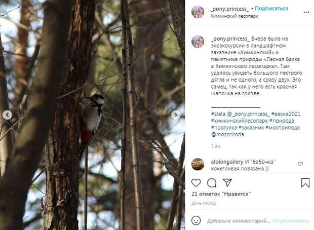 Фото дня: в Химкинском лесопарке заметили пёстрых дятлов