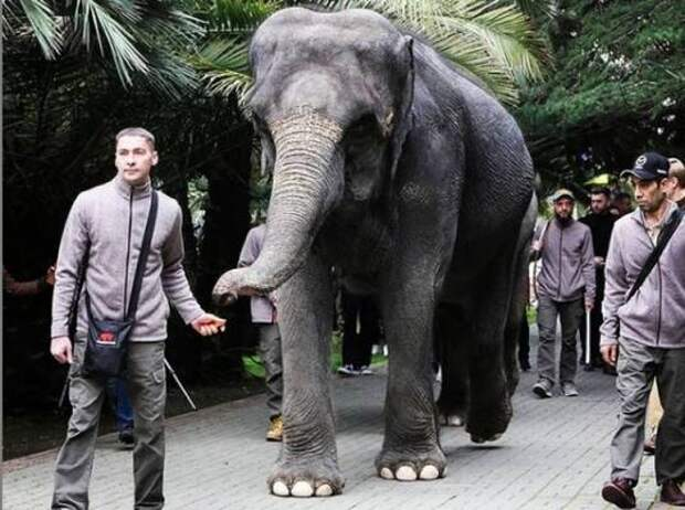 По улицам слонов водили: в Сочи необычно отпраздновали День цирка
