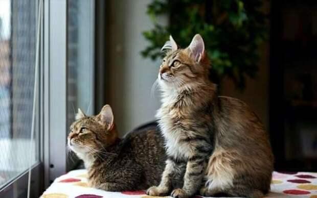 Кошачий фотопозитив (18 фото)