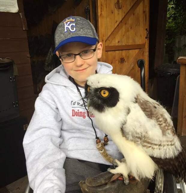Особые лечебные совы помогли маленькому мальчику