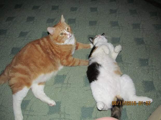Из соседнего подъезда мужик пинает котят...