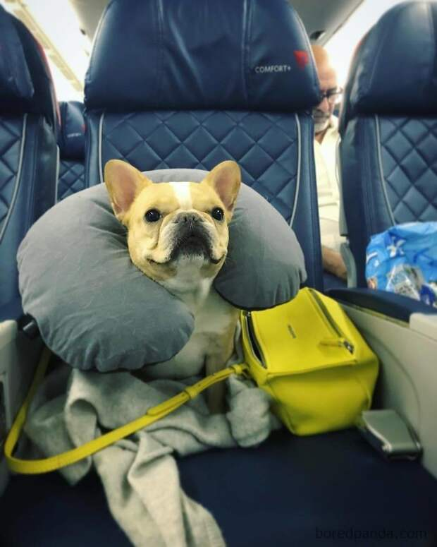 Еще один счастливый путешественник животные, жизнь, мир, роскошь, собака, удобство, фото