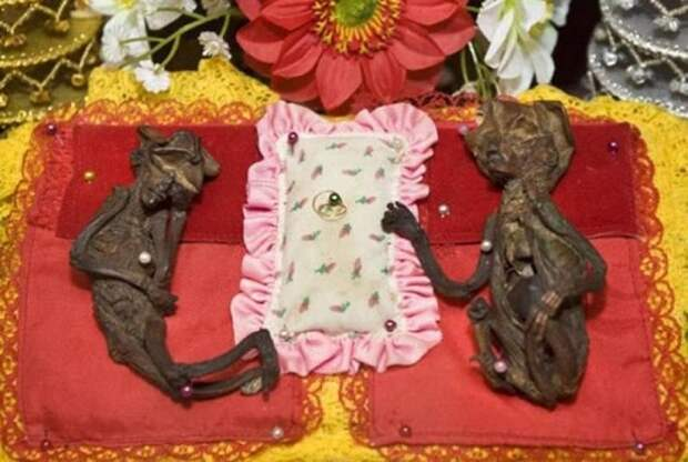 Мумии фей из буддистского храма