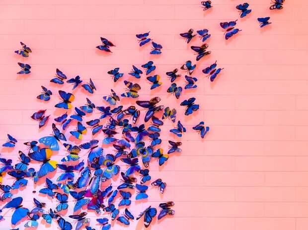Легкий летний тест: Какая вы бабочка?