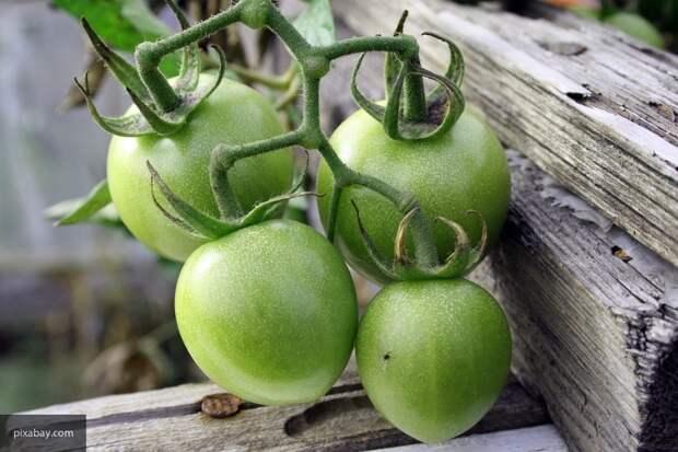Названо лучшее время для высадки в теплицу рассады помидор