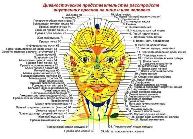 http://img1.liveinternet.ru/images/attach/c/7/95/712/95712349_diagnostika_zdorovya_po_licu_i_shee_chel__2_.jpg