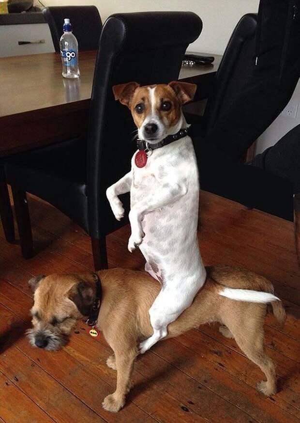 Собаки тоже бывают нелогичны в своих поступках