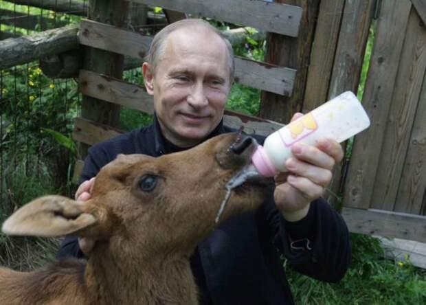 Путин поит молоком
