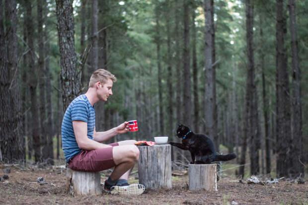 """В 2015 году Рич и Уиллоу оставили родную Тасманию, и уже больше двух лет колесят по Австралии. """"Я продал свой дом и бросил работу, но не смог оставить это маленькое существо!"""" - говорит Рич австралия, коты, мило, природа, путешествия, туризм, фото, фургон"""