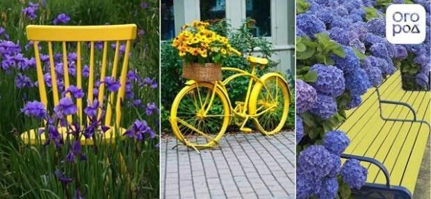 сочетание желтого и фиолетового в саду