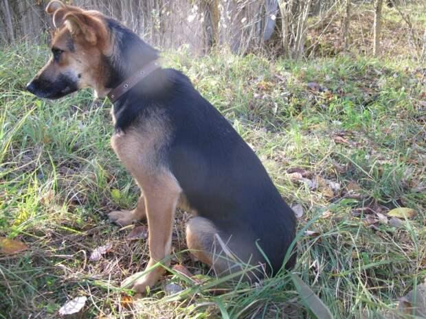 Последствия автомобильной аварии для этой собаки были более серьезными, чем казалось на первый взгляд авария, приют, собака