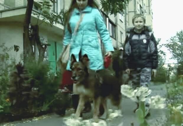 Жительница Киева встретилась со своей собакой, спустя 10 лет после пропажи