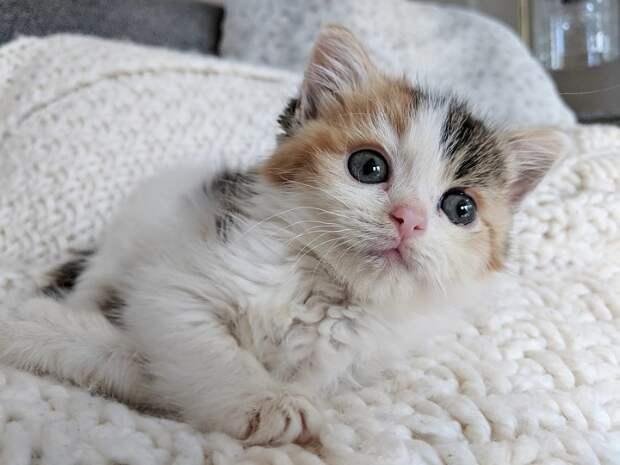 Вот как сделать ласковым злого котёнка