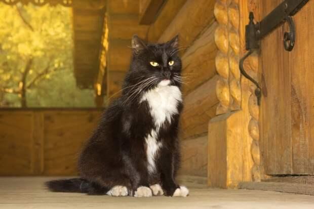 Как кошки указывают на присутствие негативной энергии в доме
