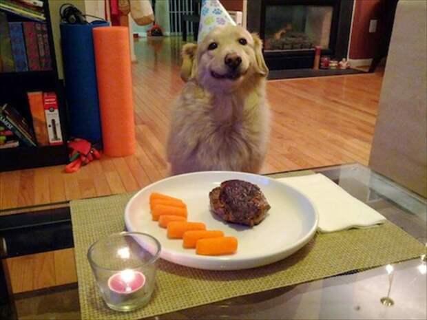 Хозяин приготовил ужин для собаки в честь ее дня рождения животные, жизнь, мир, роскошь, собака, удобство, фото