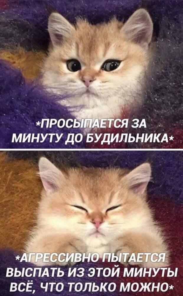Шутка про котов
