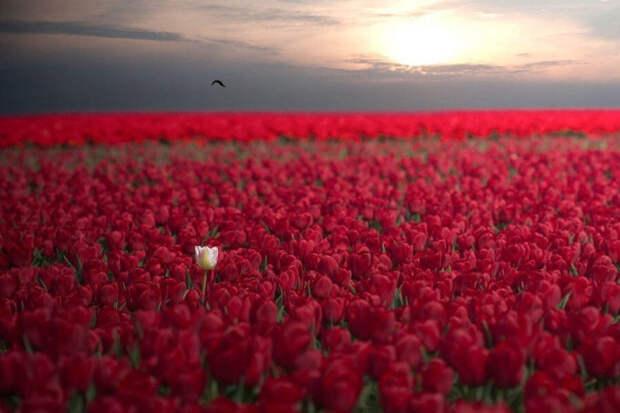 Подборка невероятно красивых фото, которая доказывает, что жизнь прекрасна и удивительна