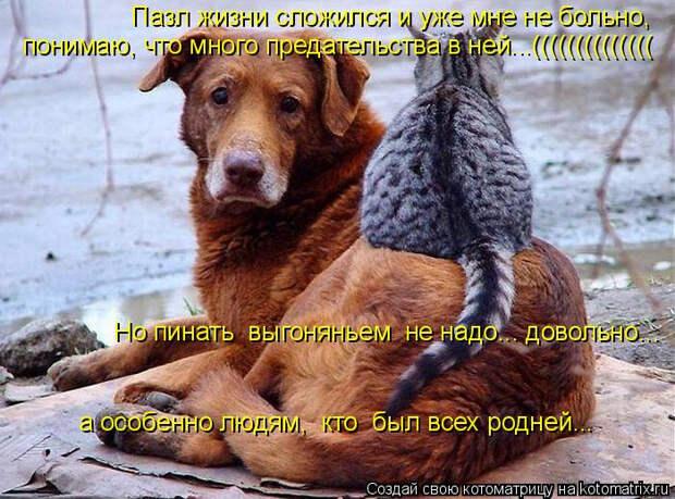 kotomatritsa_X3 (700x519, 363Kb)