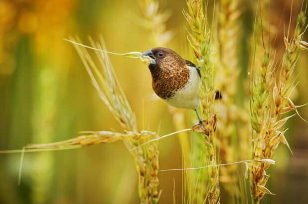 10+ забавных и красивых фотографий птиц от профессионалов