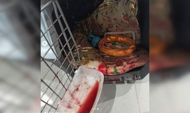 В багаже летевшего в Симферополь самолета пострадала собака