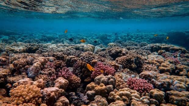 Следы вещества внеземного происхождения обнаружены в океане