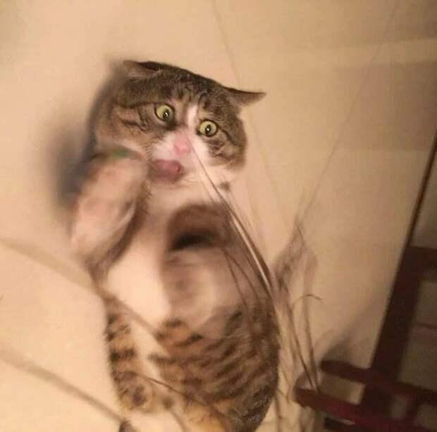 Мой кот сломался: 13 усатых, которых не узнали хозяева