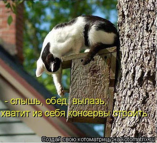 Милаха и кот Громило