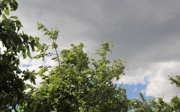 МЧС: Гроза и дождь в Рязанской области будут два дня подряд