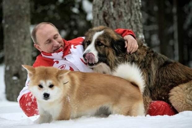 Путин и собаки