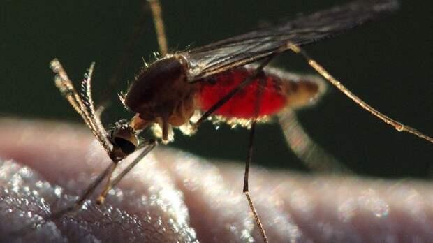 """Энтомолог Гниненко назвал заболевания, которые можно """"подхватить"""" от комаров"""