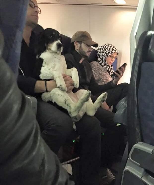 Мое место - рядом с хозяином! животные, забавно, летайте самолетами, мило, пассажиры, самолет, собаки, хвостатые пассажиры