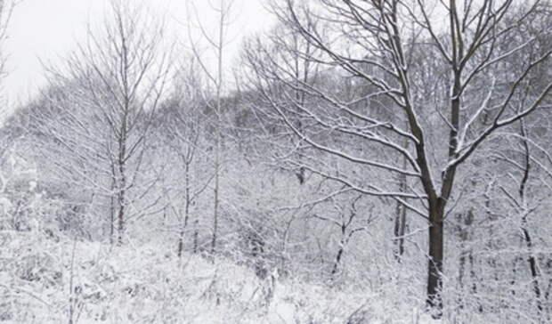 Босые и полуголые: многодетная мать бросила детей в лесу в Новой Москве