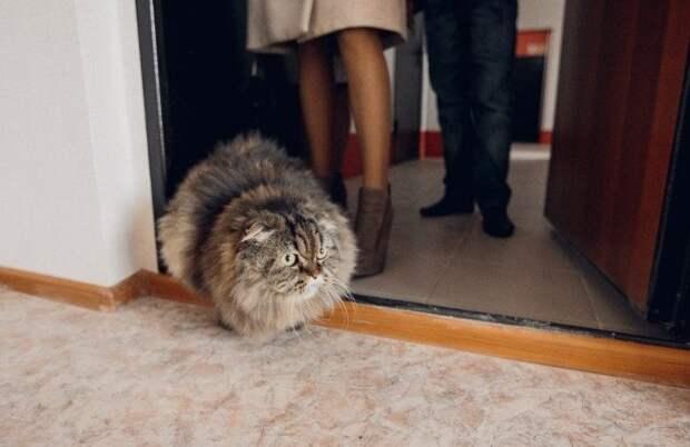 Почему в дом первой запускают кошку?