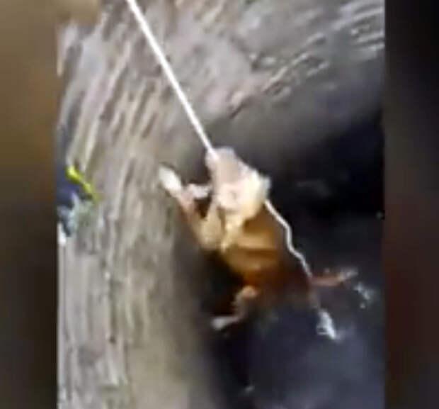 На дне глубокого колодца они обнаружили истощенного пса, но под рукой была лишь веревка