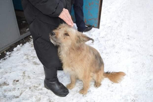 В Кемеровской области спасли собаку, которая мучилась в запертом подвале