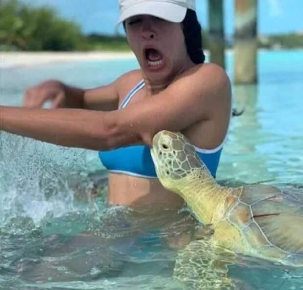 Черепаха укусила девушку
