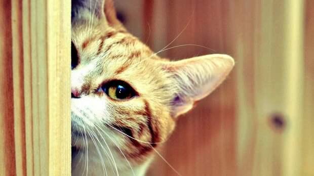 Опущенный хвост и еще 10 признаков того, что кошка вас недолюбливает