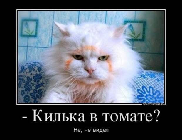 1449394242_przhv-0