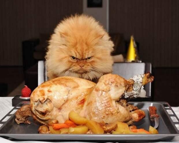 """Анекдот от Михалыча. """"Курицу подавать?"""". Еврейская свадьба"""